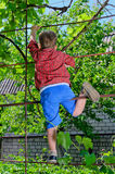 Young boy playing in the garden Royalty Free Stock Images