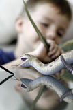 Young boy playing. With his plastic animals at home Royalty Free Stock Photography