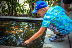 Young boy playing in water of a pond Stock Photography