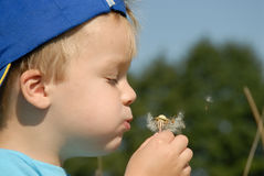 Young boy portrait. Young boy blowing seeds far away Stock Image