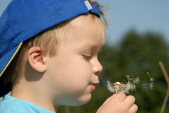 Young boy portrait. Young boy blowing seeds far away Royalty Free Stock Photography