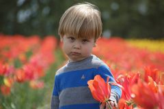 Young boy pouting in a tulip field, looking at the camera stock photos