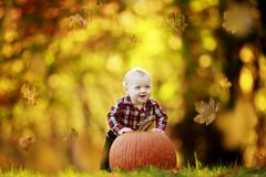 Young boy with pumpkin Stock Images