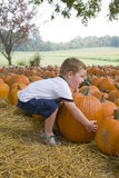 Young boy in pumpkin patch Royalty Free Stock Photos