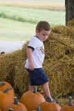 Young boy in pumpkin patch Stock Photo