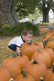 Young boy in pumpkin patch Stock Image