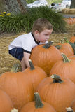 Young boy in pumpkin patch stock photos