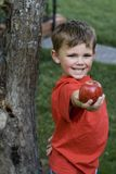 Young boy with red apples. Young boy smiling holding out an apple by an apple tree Stock Photography