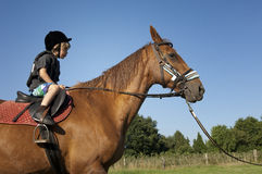 Young boy ride a horse royalty free stock photo