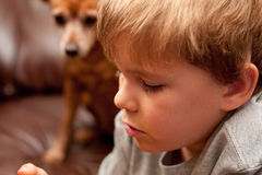 Young boy's face with little dog in background Royalty Free Stock Photos