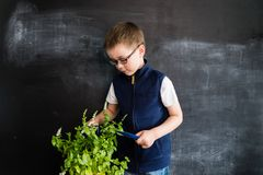 Young boy`s standing near plant in pot. Young gardener. Creative design concept for 2019 calendar. Young boy`s standing near plant in pot. Young gardener stock images