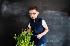 Young boy`s standing with the plant near blackboard. Young gardener. Creative design concept for 2019 calendar. Young boy`s standing with the plant near royalty free stock photo