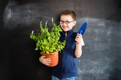 Young boy`s standing with the plant near blackboard. Young gardener. Creative design concept for 2019 calendar. Young boy`s standing with the plant near royalty free stock image