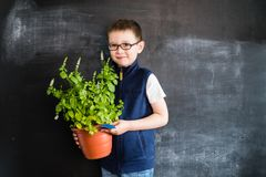Young boy`s standing with plant in pot in his hands near blackboard. Young gardener. Creative design concept for 2019 calendar.  royalty free stock images