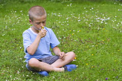 Young boy sitting in a meadow Royalty Free Stock Image