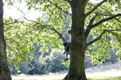 A young boy sitting in a tree Stock Photography