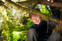 Young boy sitting in a tree smiling Stock Image