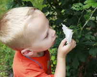 Young boy smelling a flower Royalty Free Stock Image