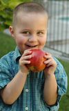 Young boy snacking on a juicy. Young boy getting ready to bite into a delicious apple; good concept shot for developing healthy diet habits Royalty Free Stock Photography