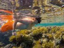 Young boy Snorkel swim in coral reef Royalty Free Stock Images