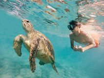 Young boy Snorkel swim with green sea turtle, Egypt. Young boy snorkel synchronous swim with big adult green sea turtle chelonia mydas in exotic tropics paradise Royalty Free Stock Photography