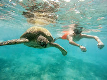Young boy Snorkel swim with green sea turtle, Egypt. Young boy snorkel synchronous swim with big adult green sea turtle chelonia mydas in exotic tropics paradise Stock Photos