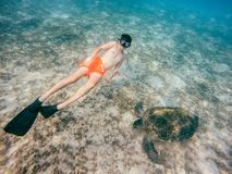 Young boy Snorkel swim with green sea turtle, Egypt Stock Photo