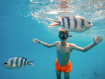 Young boy Snorkel swim in shallow water with coral fish royalty free stock photography