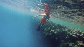 Young boy snorkel swim in shallow water with coral fish. Young boy snorkel swim in underwater exotic tropics paradise with fish and coral reef, beautiful view of stock video footage