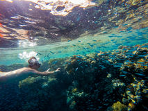 Young boy Snorkel swim in shallow water with coral school of fish stock photo