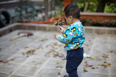 Young boy sweeping leaves Royalty Free Stock Images