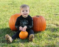 Young boy with three pumpkins Stock Image