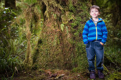 Young boy tourist in New Zealand rain forest Stock Images
