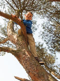 Young boy  tree climbing Royalty Free Stock Image