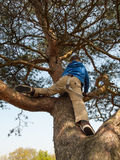 Young boy tree climbing Stock Photos