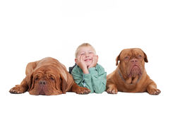 Young boy and two big dogues de bordeaux Stock Photos