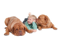 Young boy and two big dogues de bordeaux Stock Image