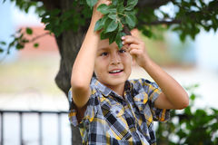 Young boy under a tree Stock Photo
