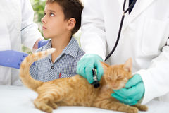 Young boy in a veterinary clinic with  cat  waiting to finish th Royalty Free Stock Photo