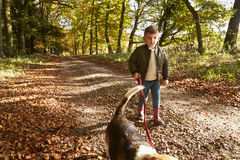Young Boy Walking Dog In Autumn Woodland Stock Photography