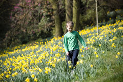 A young boy walking through a field of daffodils in spring time Royalty Free Stock Images