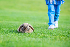 Young boy walking with pet rabbit in park Royalty Free Stock Photo