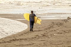 Young boy walking toward ocean with wetsuit and yellow surfboard - almost monochromatic in browns and ochers royalty free stock photography