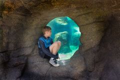 Young Boy Watching Sea Life Penguins. Young boy watching penguins large sea life tank. Location Seattle Woodland Park Zoo stock photo