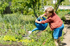 Young boy watering rows of vegetables Royalty Free Stock Image