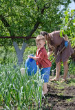 Young boy watering the vegetable garden. Young boy watering vegetable garden from a large blue plastic watering can while his mother works behind him weeding Stock Photo