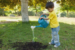 Young boy watering a young plant in park Royalty Free Stock Images