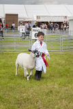 A young boy wins first prize with his lamb at the Royal Cheshire. Cheshire, England - June 22nd 2016 : A young boy wins first prize with his lamb at the Royal Royalty Free Stock Photos
