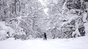 Young boy in winter forest stock video