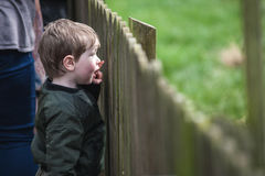 Young boy at wooden fence. Young boy looking with awe over wooden fence outdoors on sunny day royalty free stock photography